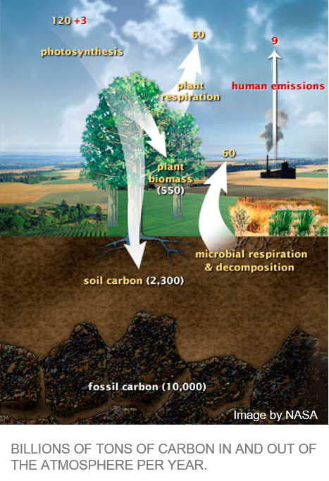 Humans and the Greenhouse Effect – Climate Institute