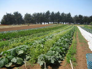 Good soil management