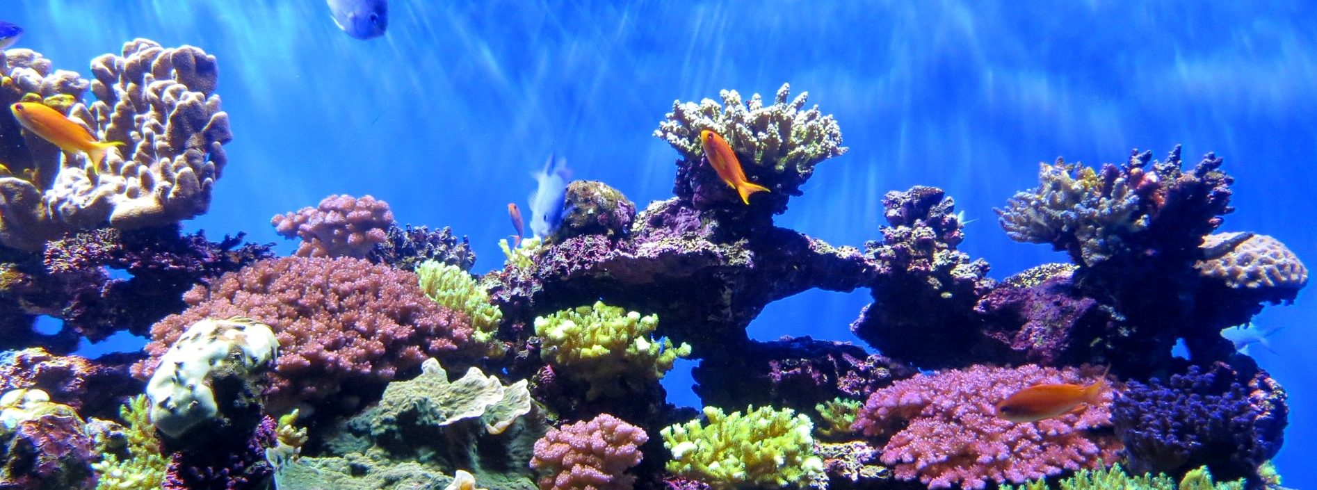 Climate Change Threatens Coral