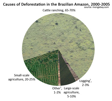 Deforestation and Climate Change – Climate Institute