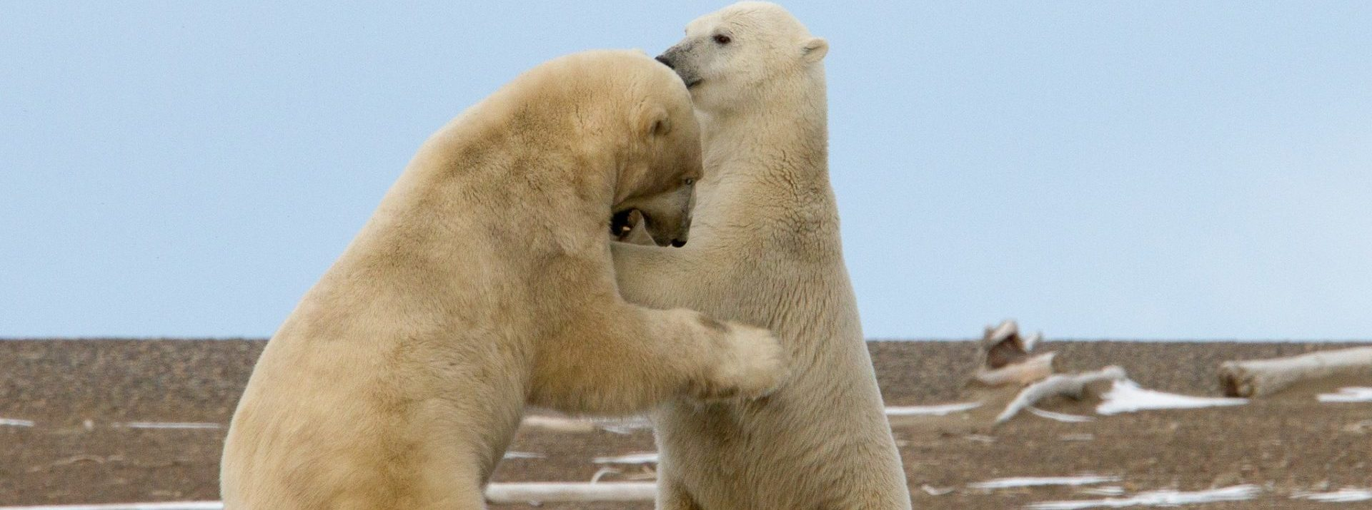 Climate Change Impact on Arctic Ecosystems